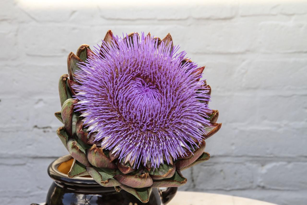"""Carciofo – Un """"Fiore"""" tutto da amare"""