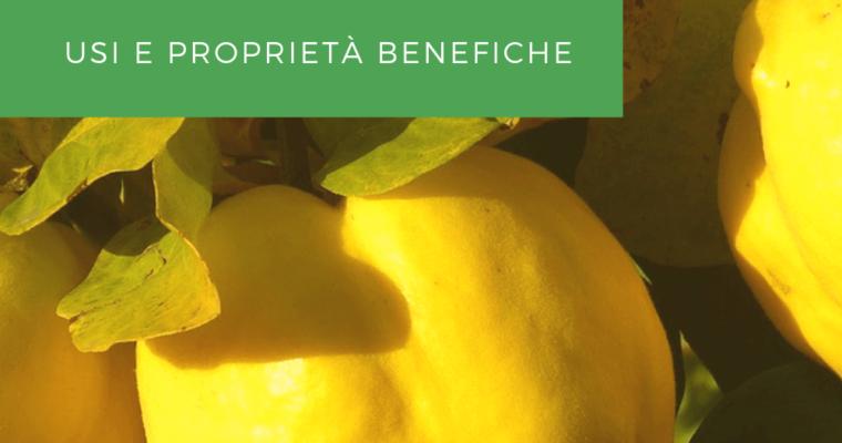 Mela Cotogna – Le Proprietà Benefiche di un Frutto Dimenticato