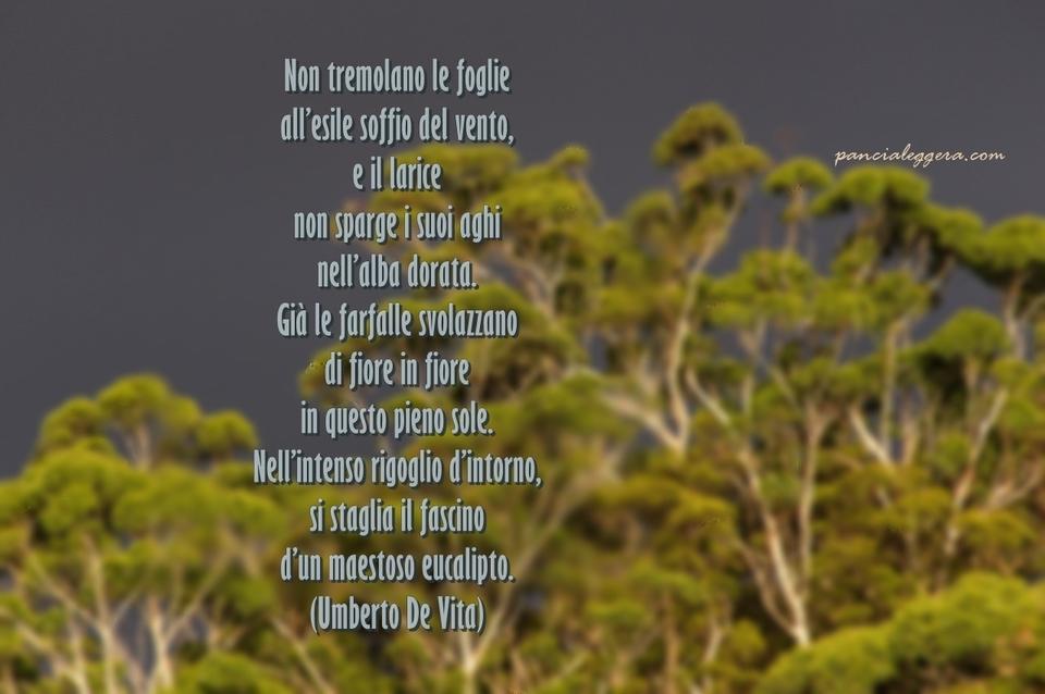 eucalipto-poesia-vita-pancialeggera