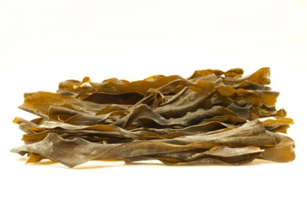 alga-kombu-pancialeggera