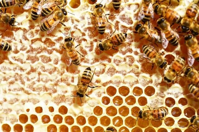 alimentazione-miele-api-pancialeggera