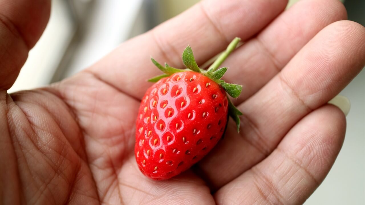 Curiosità sull'alimentazione moderna – 9 cose da sapere assolutamente