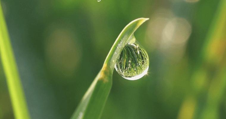 Clorofilla: che cos'è e perché mangiare cibi verdi?