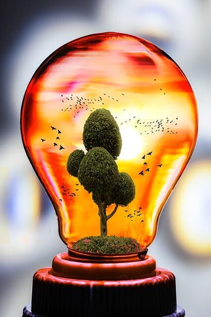 clorofilla-energia-solare