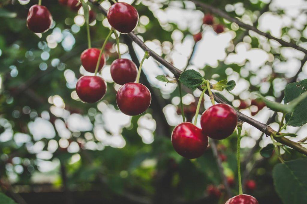 allergie stagionali frutta da evitare ciliegie